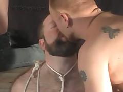 Gay Bears Tube