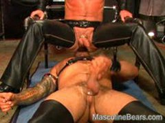 Leather Bears Ass Play